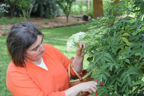 Jaci picking elderflower